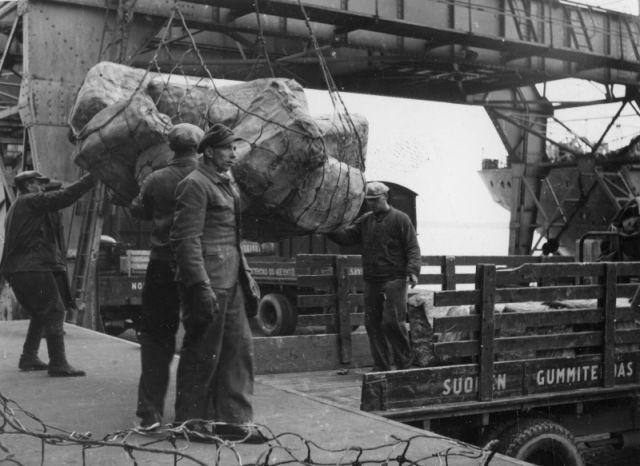 Натуральный каучук поставлялся в Suomen Gummitehdas из Южной Америки и Юго-Восточной Азии. Каучуковые деревья растут на берегах Амазонки.